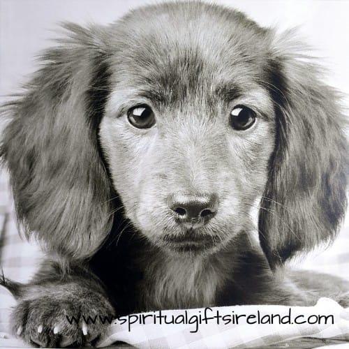 Puppy Dog Card Blank