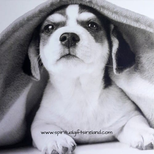 Puppy Dog Card Blank Black And White Image