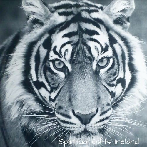 Tiger Happy Birthday Inspirational Meaningful Card