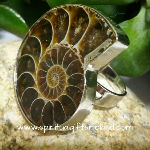 Ammonite Fossil Ring Adjustable Size