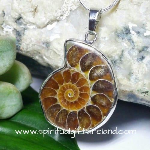 Ammonite Fossil Pendant Necklace (3)