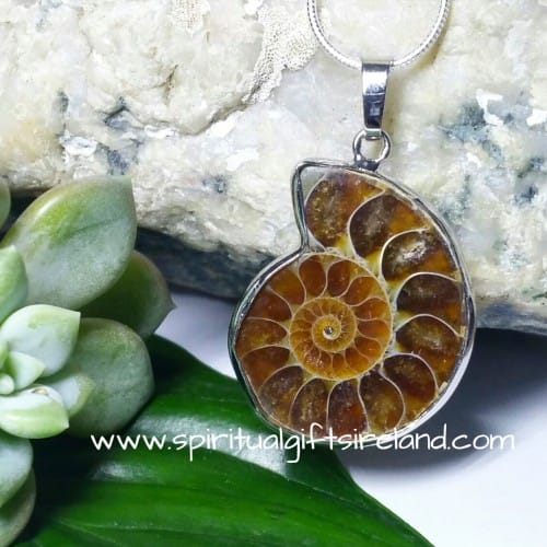 Ammonite Fossil Pendant Necklace (4)