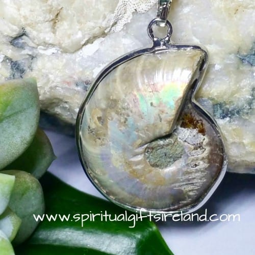 Ammonite Fossil Pendant Necklace (5)